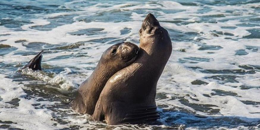 8 Wild Animals You'll Spot in SLO CAL