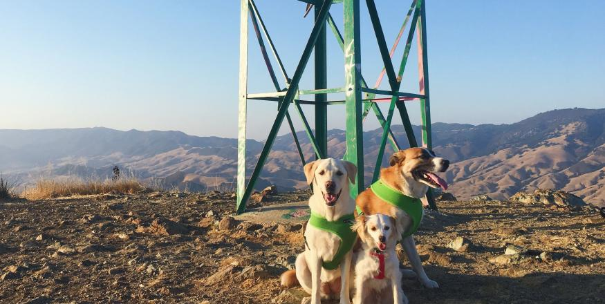 Dog-Friendly Hiking Trails in SLO County