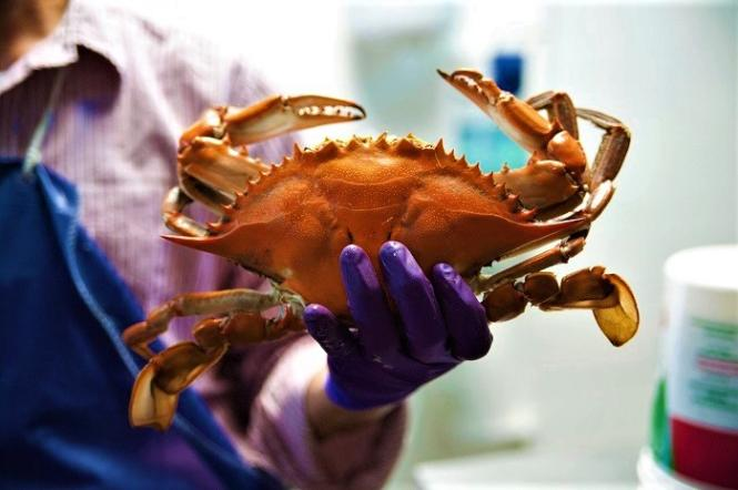 Summertime-Crabs-in-Annapolis-5