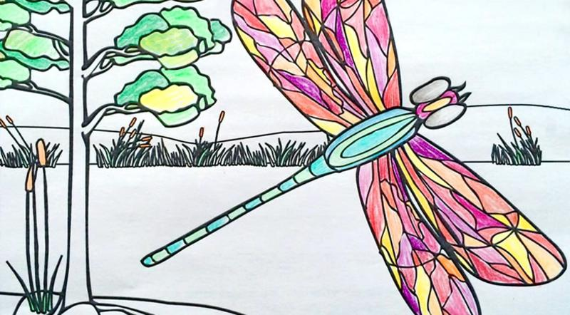 Colouring at the Dragonfly festival at Oak Hammock Marsh