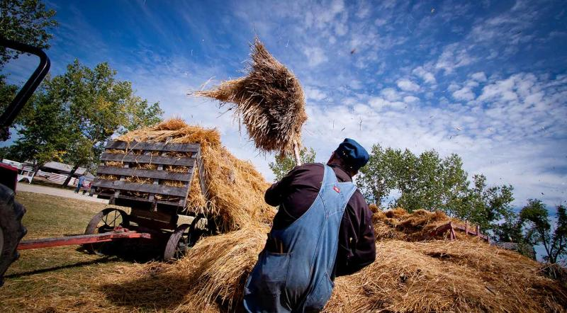 Farmer demanstrating pitching hay at Mennonite Heritage Village