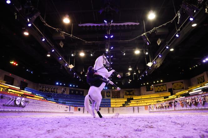 A knight practices with their steed at Medieval Times.