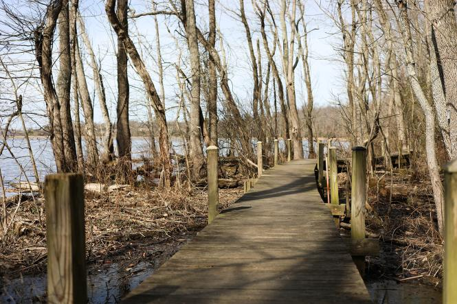 A boardwalk winds along the Patuxent River in Lothian, MD.