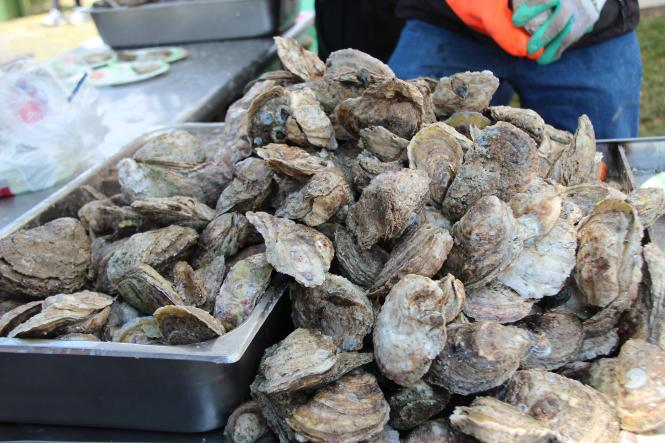 Oysters ready to be shucked.