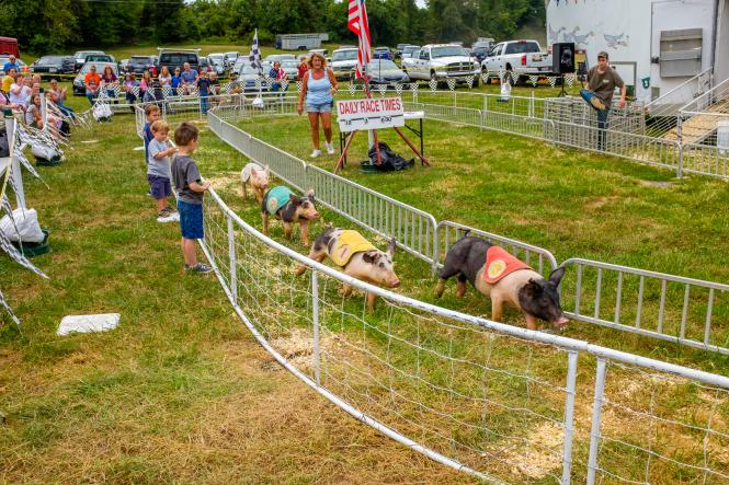 Pigs race around the track at the Anne Arundel County Fair