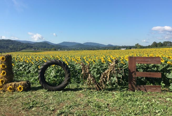 30 Events to Check Out in September 2018 in Virginia's Blue Ridge