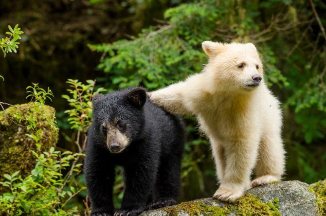Great Bear Rainforest Exhibit at Exploration Place