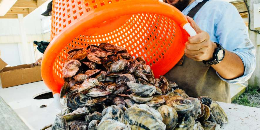 Dumping Oysters