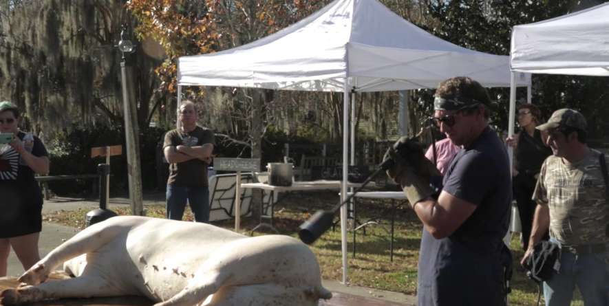 Boucherie: Cajun Art of Communal Butchering