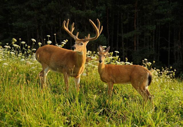 New York's Best Deer Hunting | Finger Lakes Outdoor Adventures on