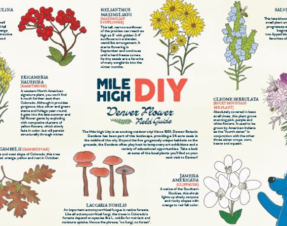 Mile High DIY_Field Guide
