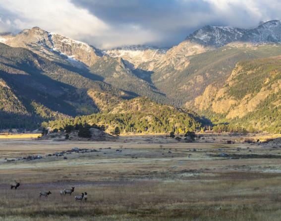 Elk in Rocky Mountain National Park near Denver, CO