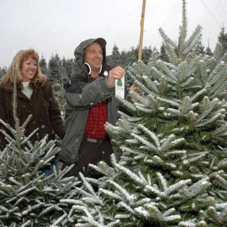 Choose & Cut the Perfect Christmas Tree | Boone, NC