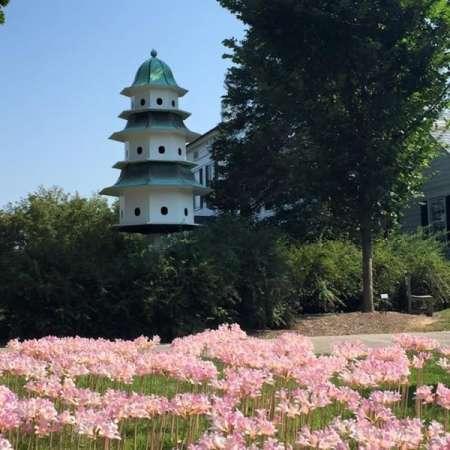 Flowers & Building