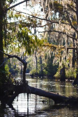Pascagoula River McCoy's River and Marsh Tour