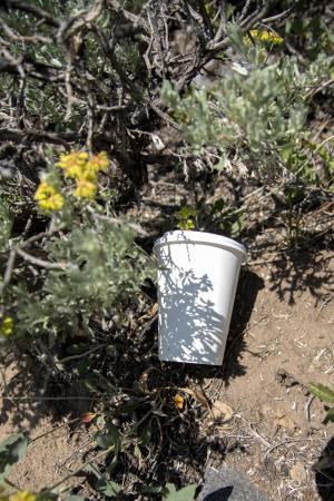 Trash Cup in Wilderness Recreate Responsibly