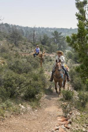 Horseback Riding Medicine Bow National Forest
