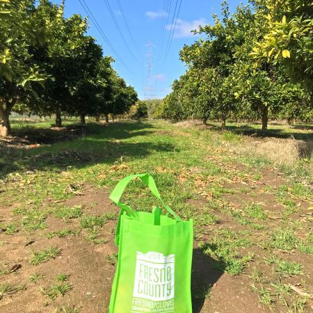 SJRPT bag in orange grove