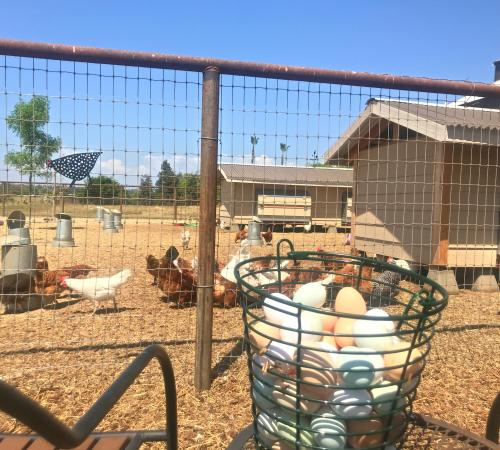 farm fresh eggs with chickens in distance