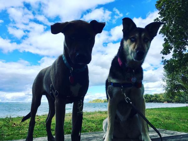 Two pups at Long Point State Park