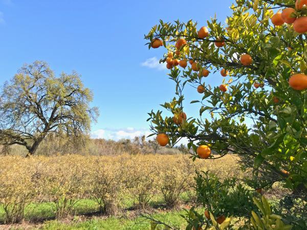 Orange tree amongst nature at SJRPT
