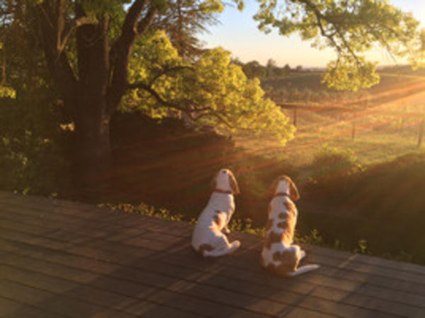 Dogs Sunset