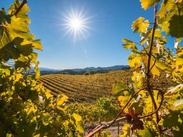 5-reasons-to-visit-napa-valley-this-fall