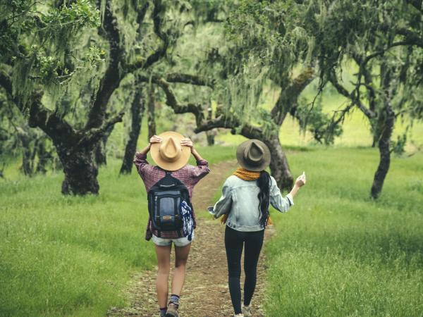 Napa Valley Wellness