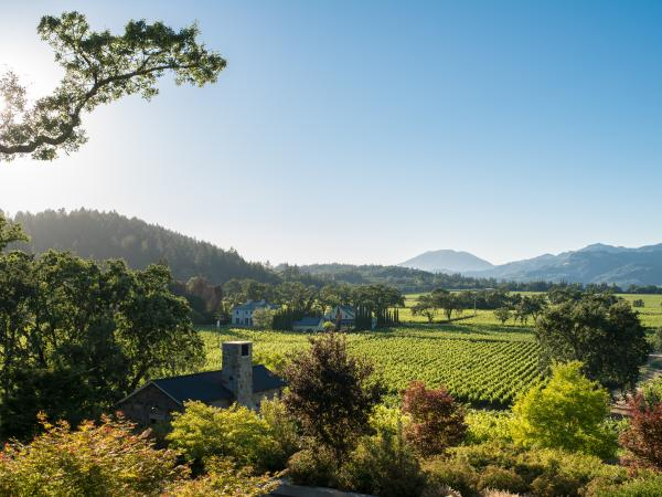 Summer in the Napa Valley