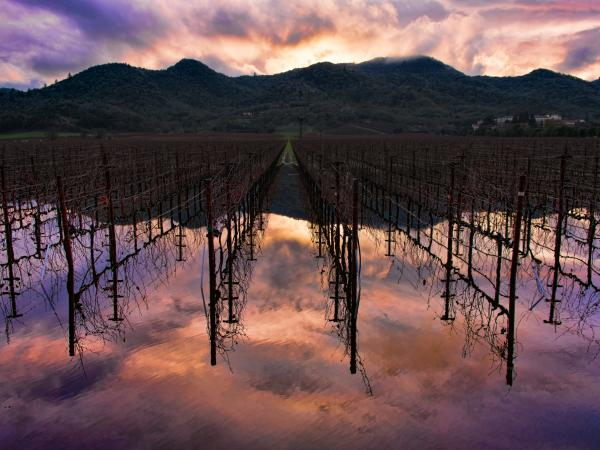 The light of a colorful sunset reflects off a pool of rainwater after a rainy day in Napa Valley.
