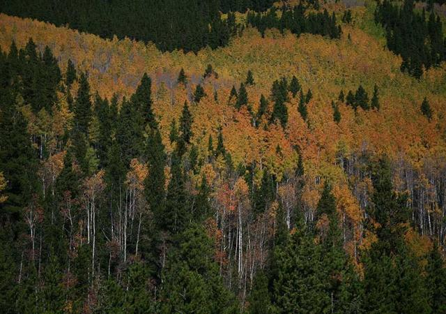 Top Spots for Fall Colors in Fort Collins