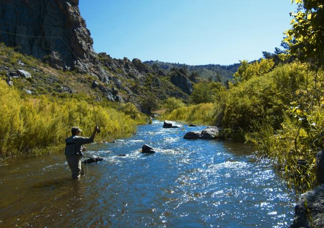 Fly Fishing in the Poudre River