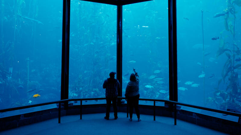 Couple stands in front of giant fish tank at Monterey Bay Aquarium