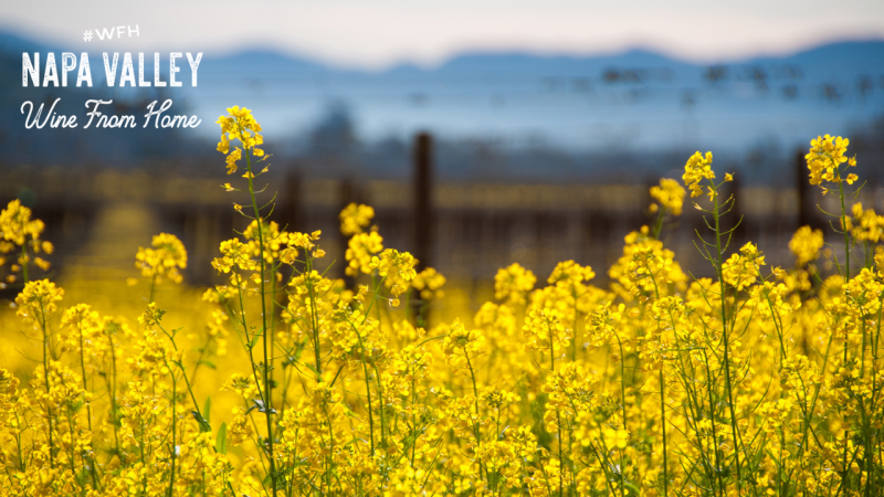 Napa Valley Zoom Background Spring Mustard Close Up