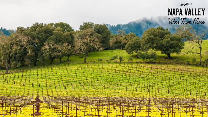 Napa Valley Zoom Background Mustard Vineyards