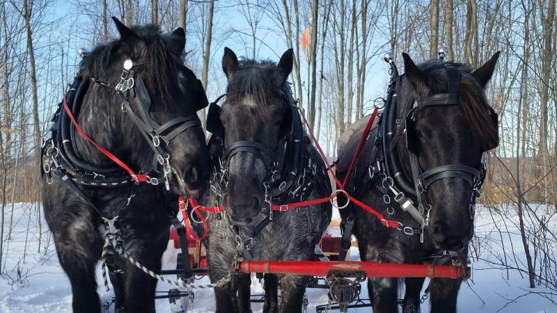 Fantail Farm Sleigh Ride Horses
