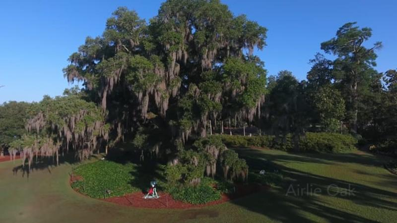 Airlie Gardens: A Century of Gardens by the Sea - WIlmington, NC