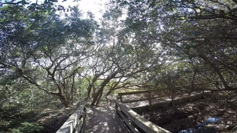 Fort Fisher State Recreation Area Basin Trail