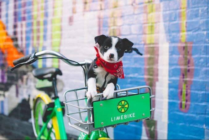 Dog in the basket of a Lime Bike rental