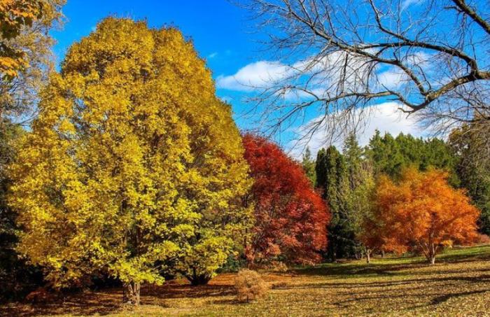 Klehm Arboretum fall