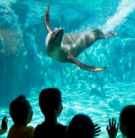 fresno chaffee zoo1