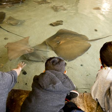 Stingray Bay at Fresno Chaffee Zoo