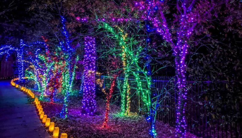 Walking Path at Botanica Illuminations 2020