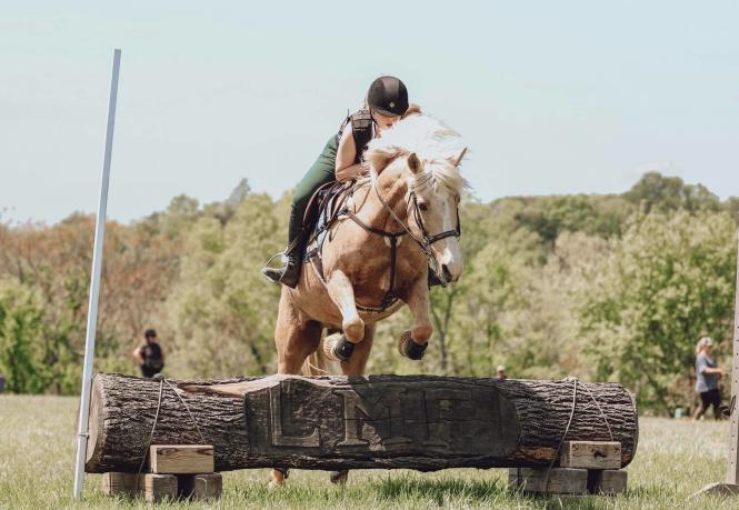 Horse jumping over an obstacle with rider,