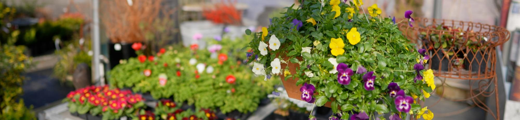 Blooming Flowers at Zenith Holland Nursery in Des Moines