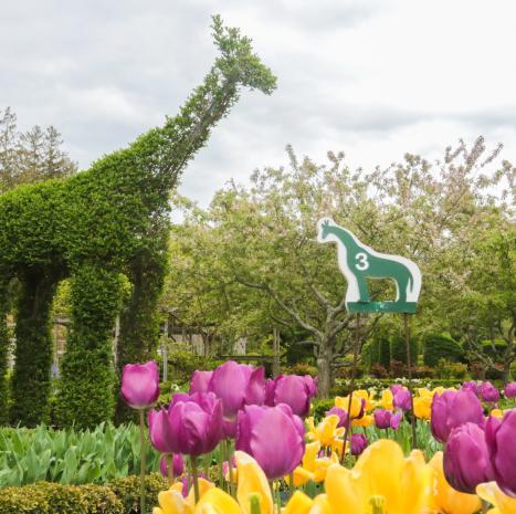 Explore a Topiary Garden