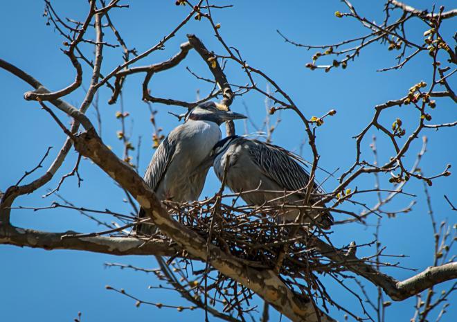 Bird Watching - Roanoke, Virginia