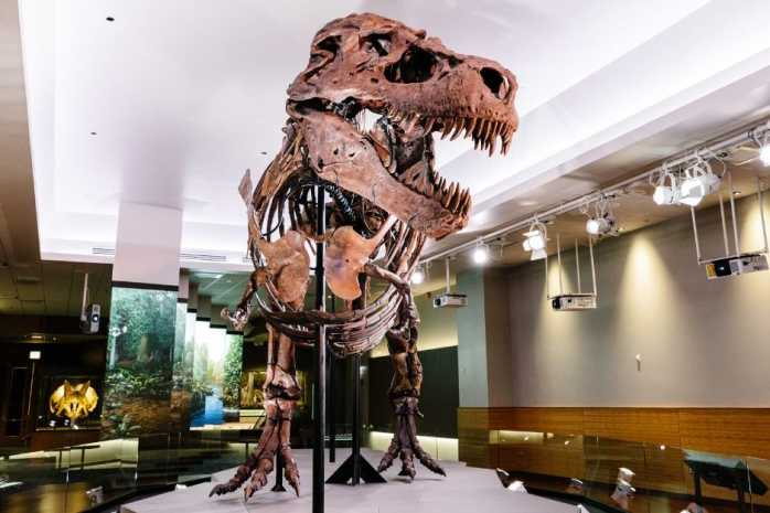 SUE: The T. rex Experience