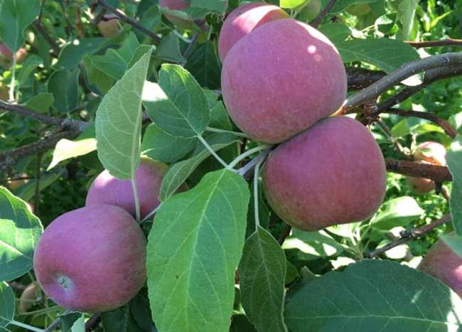 Sweet Acres Orchard