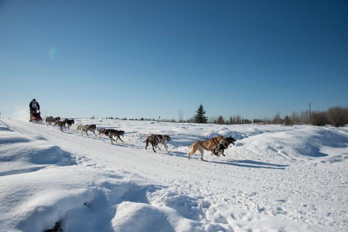 ONAC musher and sled dog team